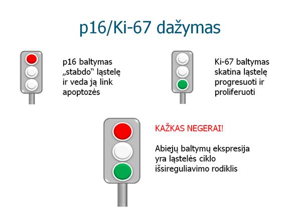 p16ki-67